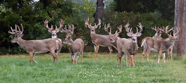 Group-Bucks-for-Ranch_2010